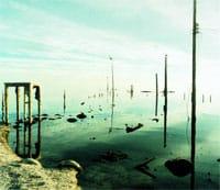 Edge of Sea and Sky, Salton Sea by Robert Dawson COURTESY ROBERT DAWSON