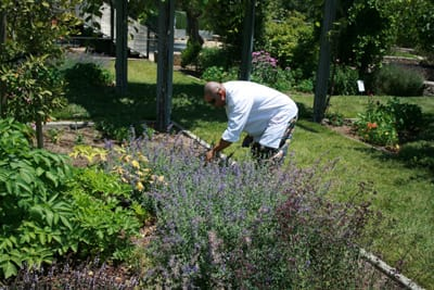 A chef from Julia's Kitchen gathers herbs in Copia's gardens.