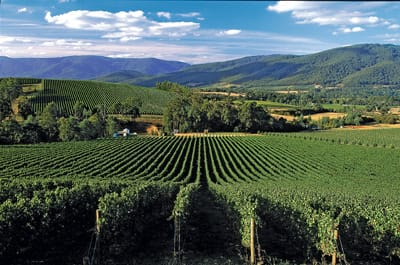 Australia's Yarra Valley produces shiraz-viognier blends similar to the syrah-viognier blends of the Rhone Valley in France.