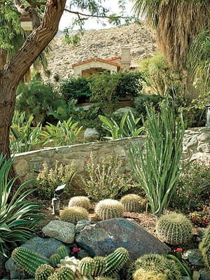 Cacti and succulents were harvested from the estate to create multiple garden areas.