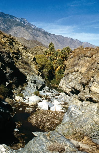 Palm Canyon Gorge