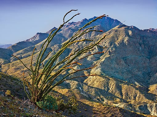 As he headed up the Bear Creek Oasis Trail, Tom Brewster paused to get a portrait of this expressive ocotillo.