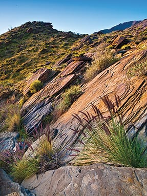 Palm Springs has its own urban edge trails, notably the Lykken Trail at the end of Ramon Road. Brewster dodged tourists on this trail to hunt for Arizona lupines. Before he found flowers, he found this undulating wall of rock.