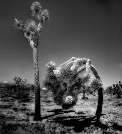 Shooting for Preservation, Earth Through a Lens, a national juried photography exhibition, returns to Palm Springs