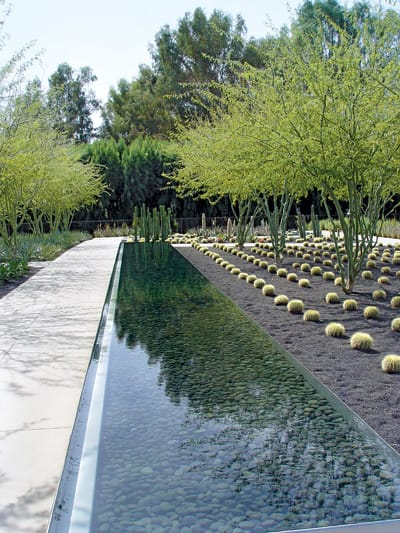 Columnar San Pedro cactus (Echinopsis pachanoi) reflect on the mirrored surface of the linear water feature beside perfectly spaced grids of golden barrel cactus (Echinocactus grusonii ) in decomposed black granite.
