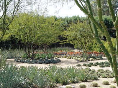 Sunnylands is a showcase for cacti and succulents, featuring a wide range of agaves and aloes in drifts of perfectly geometric masses.