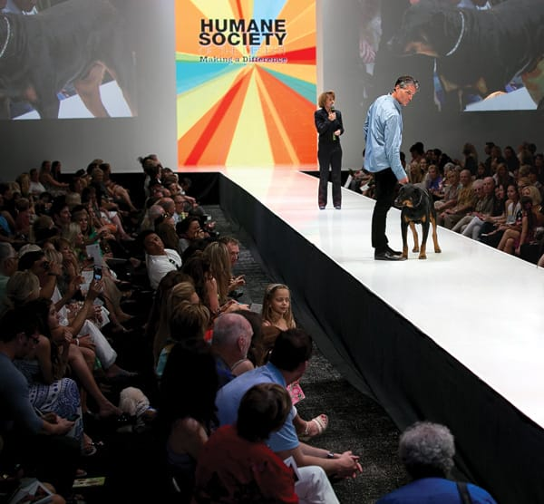 Max's big break came when he appeared in Le Chien, a canine fashion show presented by Palm Springs Life during Fashion Week El Paseo.