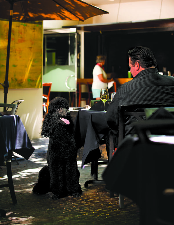 Roy, a standard poodle and off-duty guide dog, joins his dining companion Alan Franks at Spencer's restaurant in Palm Springs.