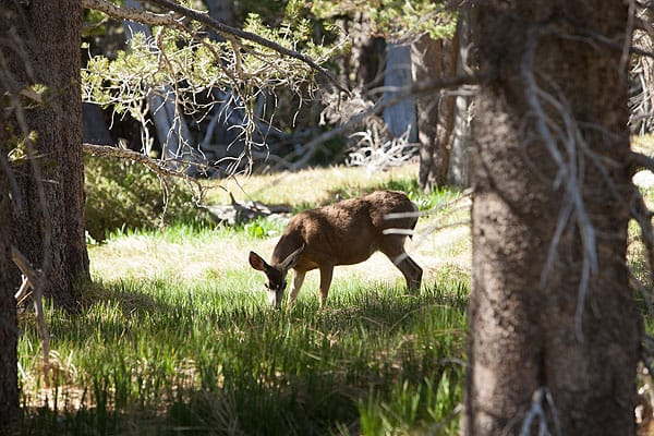 After a night of camping at Round Valley near Palm Springs Aerial Tramway, Tom Brewster wakes up to a friendly visitor grazing in the near distance.