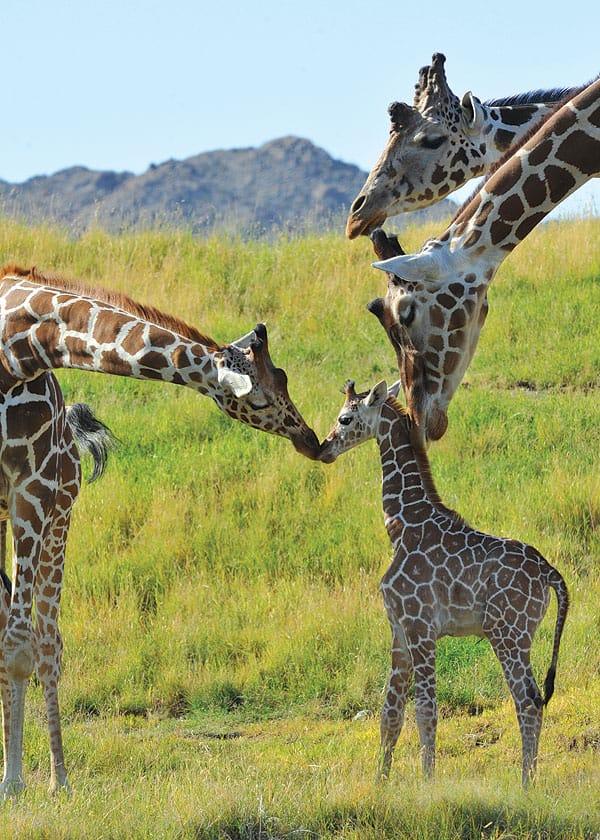 Explore the great outdoors at The Living Desert Zoo & Botanical Gardens The Living Desert.