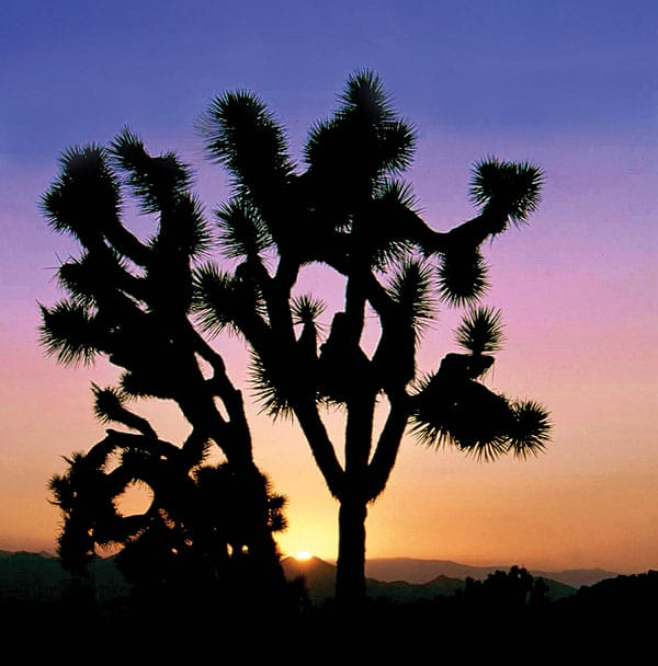 Tour Joshua Tree and fall in love with the desert.