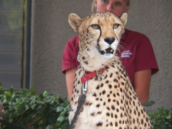 Cheetah Conservancy Fund Stops in the Desert