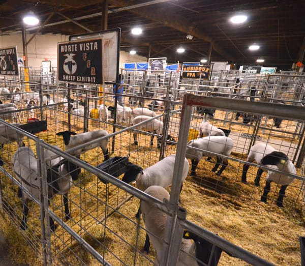 Animal enthusiasts will enjoy touring the livestock areas