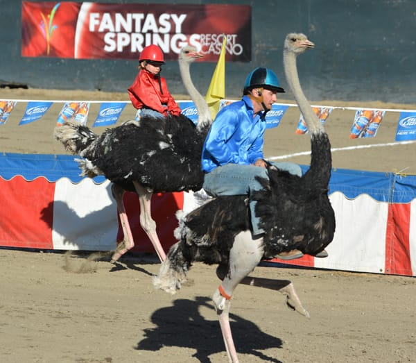 Have you ever seen an ostrich or camel race? Stop by the Riverside County Fair & National Date Festival to see this hilarious event.
