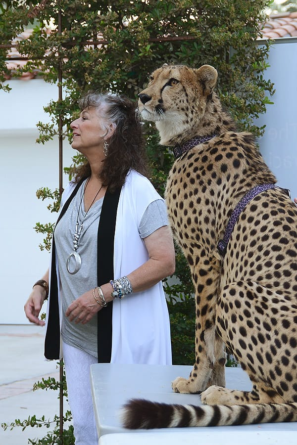 Cheetah Conservation Fund Benefit - April 19, 2015