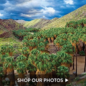 Palm Springs Images - Photos