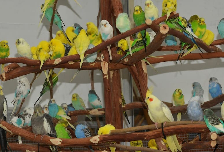 Palm Springs Attractions - For the Birds: Australian Budgies