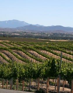 Temecula Valley Wineries Wine Palm Springs Life