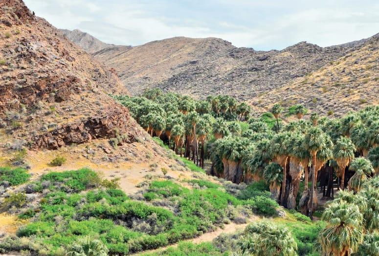 The Desert Decides