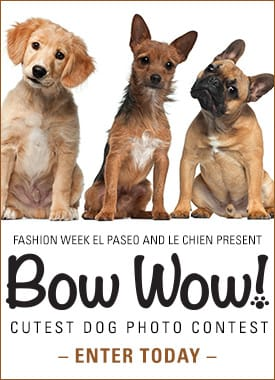 Bow Wow Cutest Dog Photo Contest