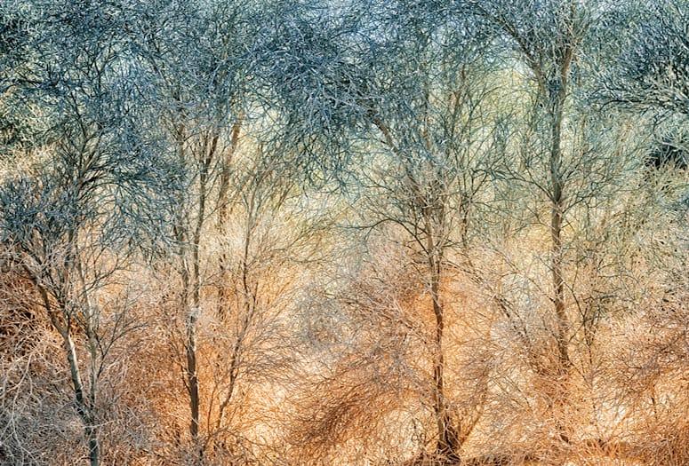 Millicent Harvey Smoke Trees