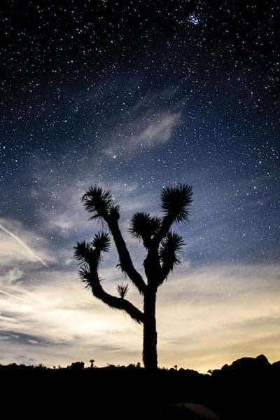 joshuatreenationalpark