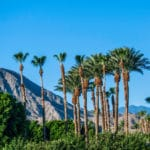 Let's Roam! Palm Springs: The Most Fun Palm Springs Walking Tour