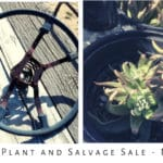 Fall Native Plant & Salvage Sale at Mojave Desert Land Trust HQ in Joshua Tree