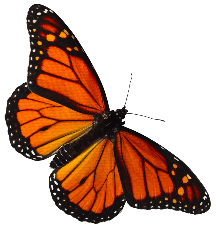 Nature Lecture: The Amazing World of Monarch Butterflies at the Palm Springs Public Library