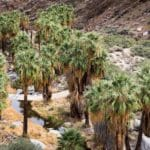 Book Details Top Palm Springs Hikes
