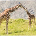 Mother's Day Brunch At The Living Desert in Palm Desert