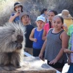 Free Admission for Children on Weekends In Honor of Hispanic Heritage Month in October at The Living Desert
