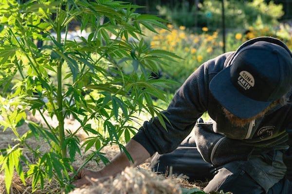 cannabisthenewleaf