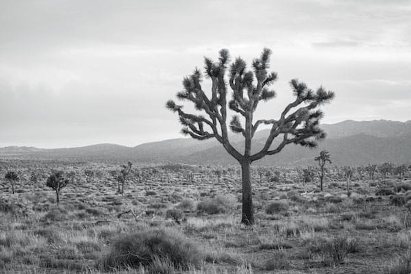 joshuatreenationalforest