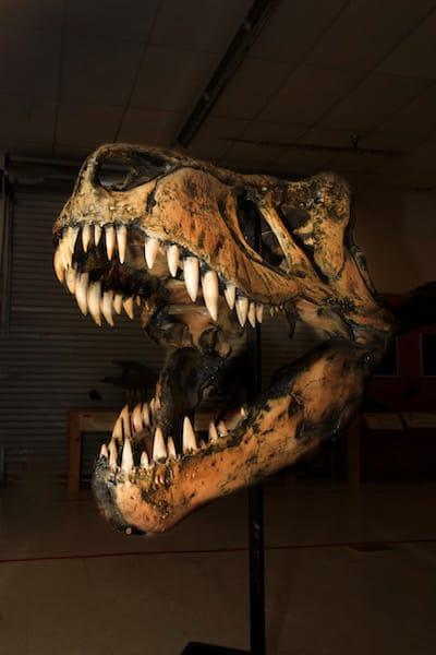 dinosaurskeleton
