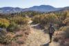 cactus springs trail