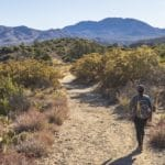 4 Reasons to Hike the Cactus Spring Trail