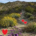 Valentine Day Hike Santa Rosa & San Jacinto Mountains National Monument Visitor Center
