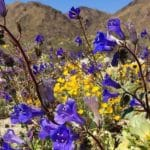 Wildflower Nature Walk at Santa Rosa & San Jacinto Mountains National Monument Visitor Center in Palm Desert