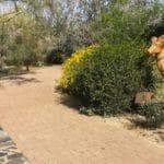 Ed Hastey Garden Walk at Santa Rosa & San Jacinto Mountains National Monument Visitor Center in Palm Desert