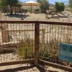 The Living Desert Lives On