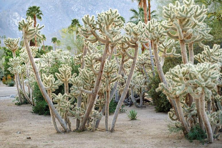 firebarrelcactus