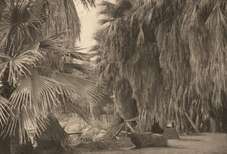 When Edward S. Curtis Met the Cahuilla