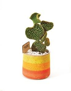 doublempotteryplanter