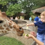 The Living Desert Zoo and Gardens: Select Amenities and Attractions Are Now Open