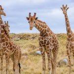 Summer Fun Begins An Hour Earlier at The Living Desert Zoo and Gardens