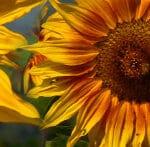 UCCE Master Gardner Program of Riverside County: Online Garden Talk Class