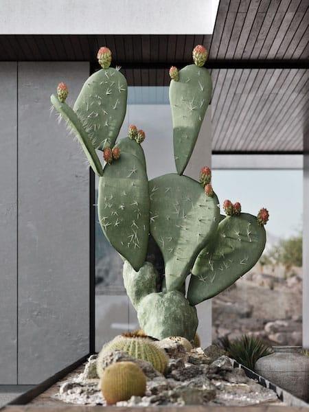 cactuspalmsprings