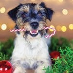 Paws 'N Claus Presented at The Gardens on El Paseo in Palm Desert