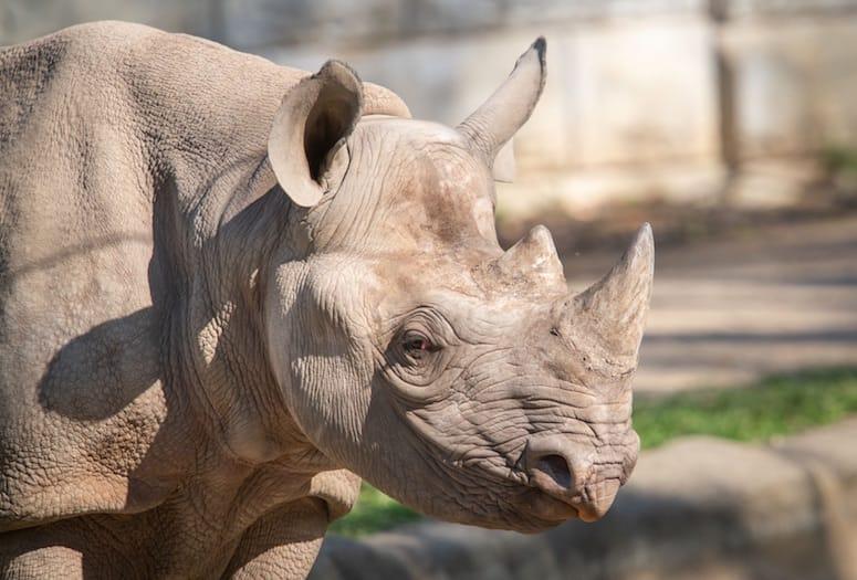 living desert rhino savanna